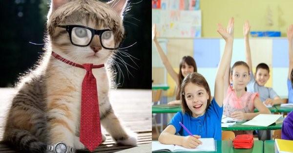 cat teacher2